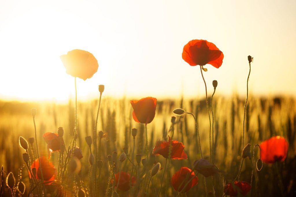 réveil lumineux  lumière orangée  lever du jour